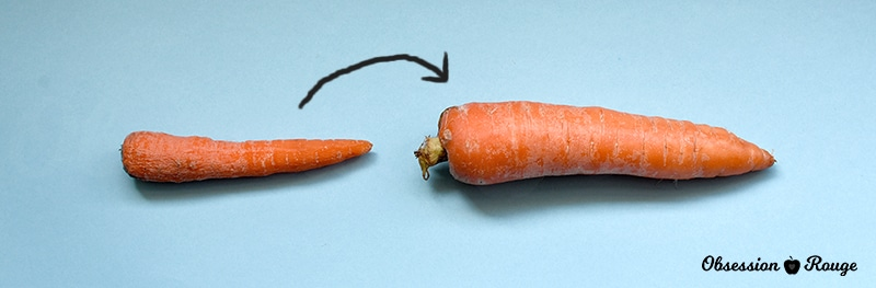 Penis size in carrots